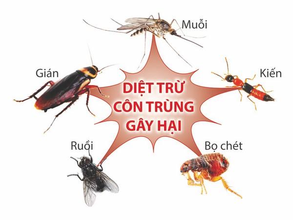 Diệt côn trùng tại quận 1