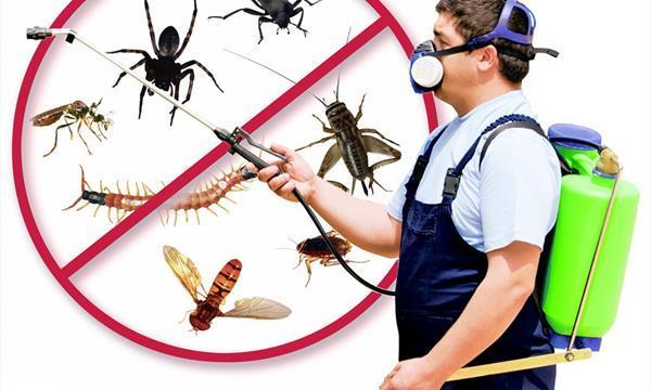 Diệt côn trùng tại Bình Chánh