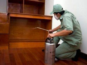 Dịch vụ diệt mối tại Quảng Nam